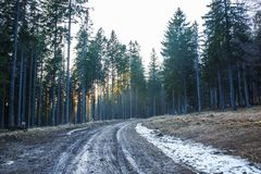 Empty forest mud road through dense woodland Royalty Free Stock Photo