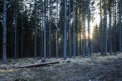 Empty forest mud road through dense woodland Royalty Free Stock Photos