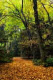 Empty forest path an autumn trees. Empty forest path and autumn leaves on ground in the park Stock Image