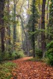 Empty forest path an autumn trees. Empty forest path and autumn leaves on ground in the park Royalty Free Stock Images