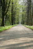 Empty forest path in spring Royalty Free Stock Image