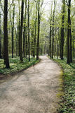 Empty forest path in spring Stock Photos