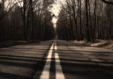 Empty forest road Royalty Free Stock Photos
