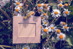 Empty frame with daisies outdoors Stock Photos