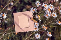 Empty frame with daisies outdoors Stock Photography