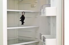 The mouse hanged the refrigerator. In an empty fridge the mouse hanged the refrigerator Stock Image
