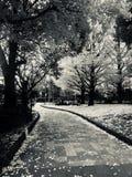 Empty Garden Pathway Stock Images