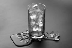 Empty glass with ice cubes isolate on grey background Royalty Free Stock Image