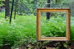Empty golden frame in nature Stock Image