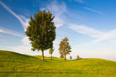 On a empty golf course. Misty morning on a empty golf course Royalty Free Stock Images