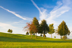 On a empty golf course. Misty morning on a empty golf course Stock Photo