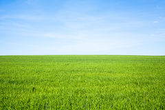 Empty Grass Field. With Blue Sky Royalty Free Stock Image