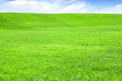 Empty grass field with blue sky Royalty Free Stock Image