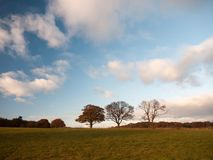 Empty grass land country trees blue sky clouds landscape plain. Essex; england; uk Stock Photos