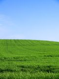 Empty Grassy Field. A grassy field extending to the horizon Royalty Free Stock Image