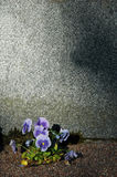 Empty gravestone Royalty Free Stock Photo