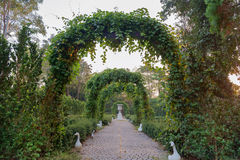Empty green arch. Empty green arch, corridor with sunny in park Royalty Free Stock Photo