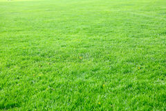 Empty Green Lawn. Summer Background Stock Photography