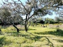 Empty Green Tall Trees Royalty Free Stock Photos