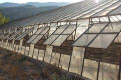 Empty Greenhouse Stock Image