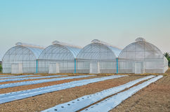 Empty greenhouse Stock Photo
