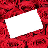 Empty greeting card with copyspace on red roses on birthday Vale Royalty Free Stock Photo