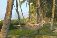 Empty hammock. Slung between palm trees Royalty Free Stock Photography