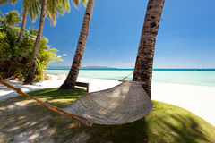 Empty hammock near coconut palms Royalty Free Stock Photo