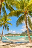 Empty hammock between palm trees on tropical beach of Bora Bora Royalty Free Stock Images