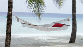Empty Hammock Between Palm Trees stock footage