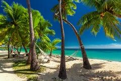 Empty hammock in the shade of palm trees on tropical Fiji Island Stock Photography