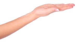 Empty hand Stock Image