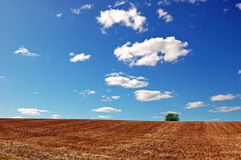Empty harvested field under cloudy blue sky Royalty Free Stock Photo