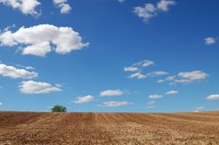Empty harvested field under cloudy blue sky Royalty Free Stock Images