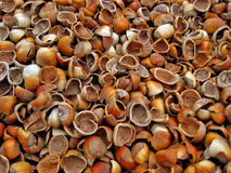 Empty Hazelnut Shells. A pile of broken hazelnut shells used as ground covering at a local winery in Carlton Oregon Stock Image