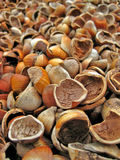 Empty Hazelnut Shells. A pile of broken hazelnut shells used as ground covering at a local winery in Carlton Oregon Royalty Free Stock Photos