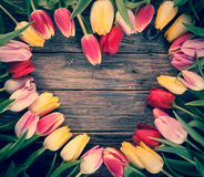 Empty heart-shaped frame of fresh tulips stock images