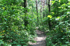 Empty hiking trail royalty free stock photography