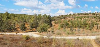 Empty hiking trail among low hills with pine-trees Stock Photo