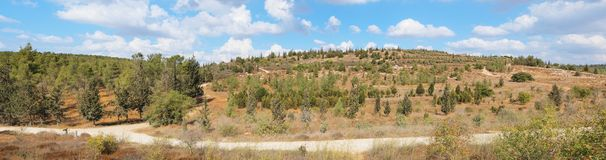 Empty hiking trail among low hills with pinetrees Stock Image