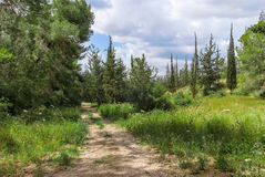 Empty hiking trail in the pine tree Stock Photo