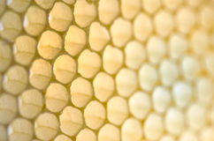 Empty HoneyComb. On diagonal with small depth of field Stock Images