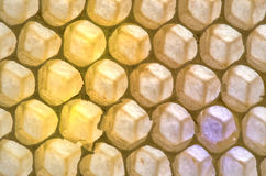 Empty Honeycomb. Empty Honey Comb yellow and orange Stock Photos