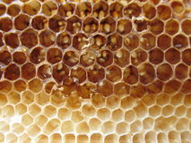 Empty honeycomb texture close-up Stock Image