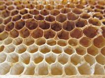 Empty honeycomb texture pattern background. Propolis empty honeycomb texture background close-up Royalty Free Stock Photos