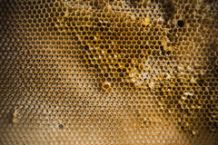 Empty Honeycomb. Used, empty and old honeycomb with ants Stock Images
