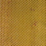 Empty honeycomb wax Royalty Free Stock Photo