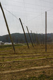 Empty Hop Field in Bavaria, 2015 Stock Photo