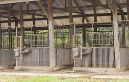 Empty Horse barn Royalty Free Stock Photography