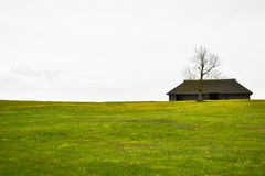 Empty house. Empty, old house and a tree standing at the edge of dandelion meadow Stock Photos